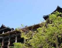 9月だ!そうだ 京都、行こう。 京都に行ったら使うべきカードとは?