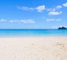 サラリーマンマイラーに朗報!? ANA新社長は繁忙期もマイルでハワイに行けるようにすると明言
