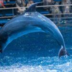 アメックスの水族館に無料で招待の「Staycation by Amex AQUA DREAM」を申し込んで見た!